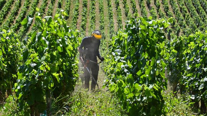 Les appellations viticoles wallonnes modernisées :