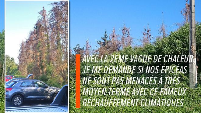 Destruction des épicéas par les scolytes: une amplification redoutée, les arbres morts pas évacués assez vite