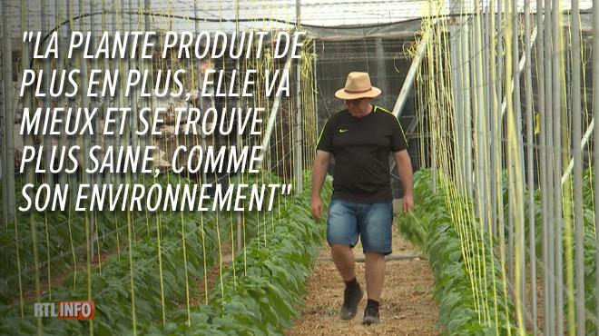 Ce cultivateur de poivrons en Andalousie a trouvé un moyen d'éviter l'usage des pesticides sous sa serre