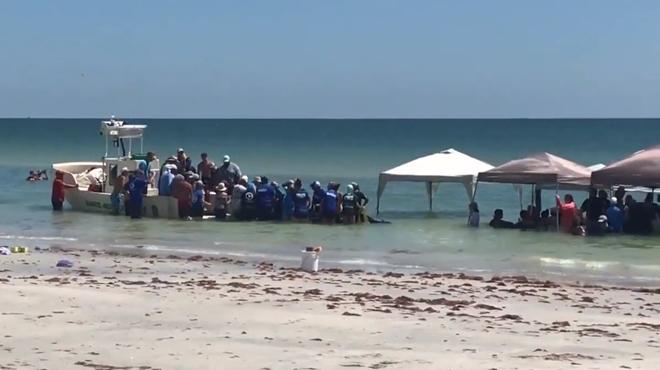 5 baleines secourues sur une plage de Floride: des centaines de volontaires ont dû intervenir (vidéos)
