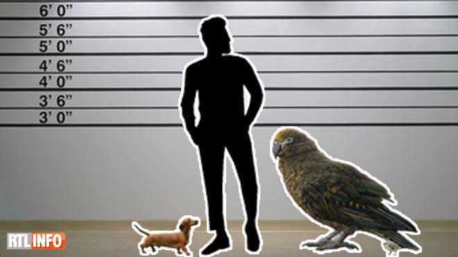 Nouvelle-Zélande: découverte de restes d'HERCULE, un perroquet géant et cannibale (photo)
