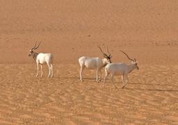 Niger: la plus grande réserve naturelle d'Afrique menacée par l'exploitation pétrolière