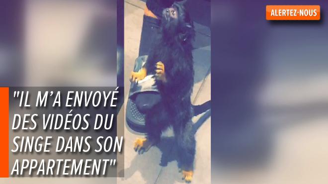 Valentin permet l'arrestation du vendeur d'un singe sur internet: