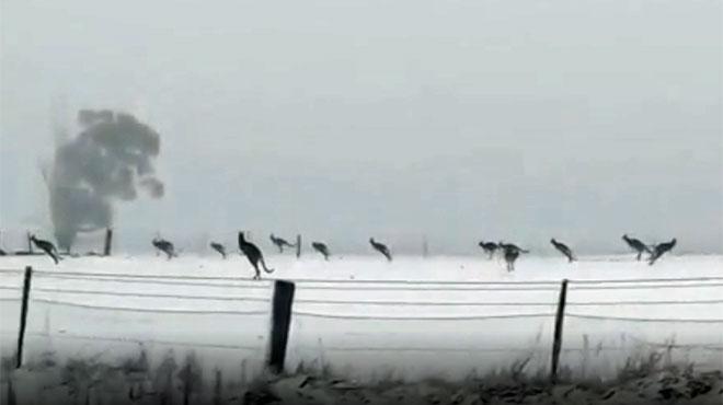 Images rares de kangourous sur la neige: un cadre irréel qui montre l'hiver extrême qui touche l'Australie