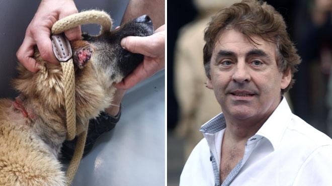 Quatre chiens saisis chez Sarah, la fille de Claude Barzotti, à Céroux-Mousty: