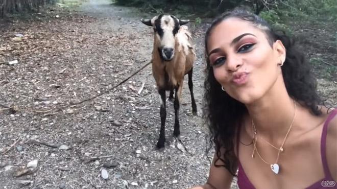 Elle veut se prendre en selfie avec une chèvre mais va vite le regretter (vidéo)