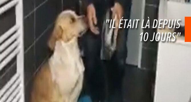 Une association française filme le sauvetage d'un chien abandonné: le propriétaire l'avait enfermé après avoir déménagé
