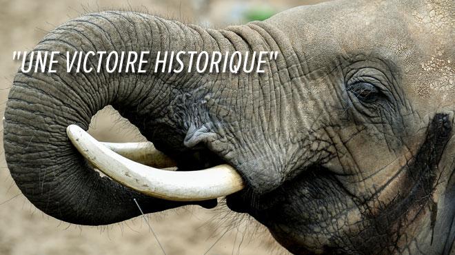 Un pas de géant dans la préservation des espèces menacées vient d'être fait