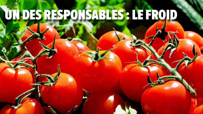 Vos tomates n'ont pas de goût? Voici peut-être pourquoi