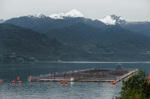 Le Chili attaque un élevage de saumon norvégien pour