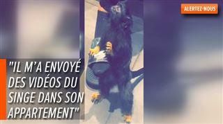 Valentin permet l'arrestation du vendeur d'un singe sur internet- Il a déposé une cage avec l'animal dans le coffre de ma voiture (vidéo) 2