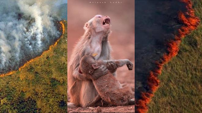 Alors que la forêt amazonienne part en fumée, de FAUSSES photos inondent les réseaux sociaux