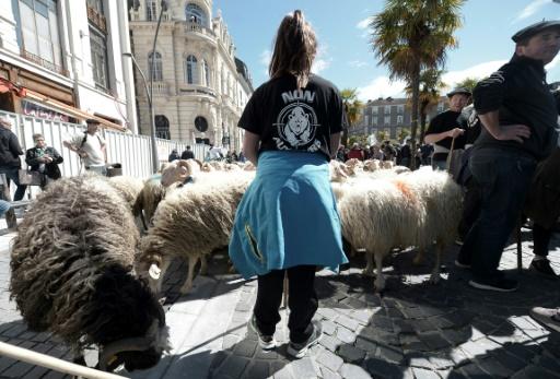 Manifestation franco-espagnole anti-ours dans les Pyrénées espagnoles