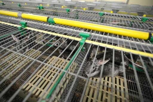 Elevage de lapins ciblé par L214: enquête judiciaire sur de possibles
