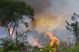 Incendies en Amazonie: une manifestation devant l'ambassade du Brésil prévue lundi à Bruxelles