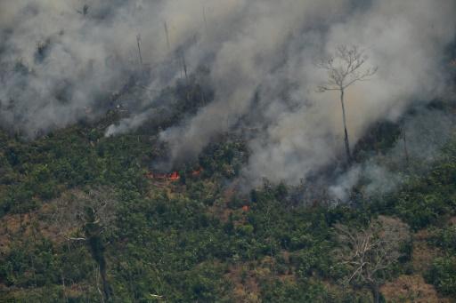 Derrière les feux en Amazonie, l'appétit mondial pour le boeuf et le soja brésilien