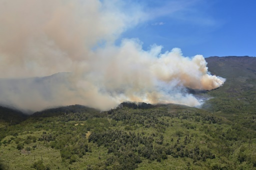 Forêts: l'Afrique brûle aussi, mais pas comme l'Amazonie