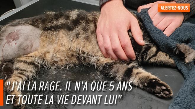 Le chat Smiley amputé d'une patte après avoir été blessé par balle à Wasmes: Laetitia scandalisée porte plainte (photos)