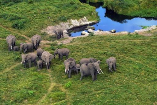 La vente légale d'éléphants sauvages d'Afrique à des zoos pratiquement interdite