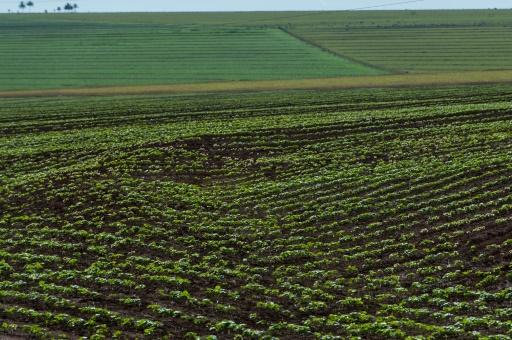 Alimentation, soja, OGM et climat: l'Europe au défi de son indépendance en protéines