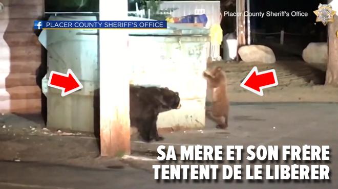Un ourson coincé dans la benne à ordures d'un motel: les policiers trouvent une astuce pour le délivrer