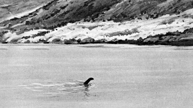 Mystère percé? Le monstre du Loch Ness pourrait être une ANGUILLE géante...