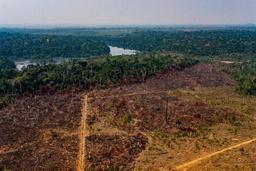 Amazonie: la déforestation affecte aussi l'Amazone et