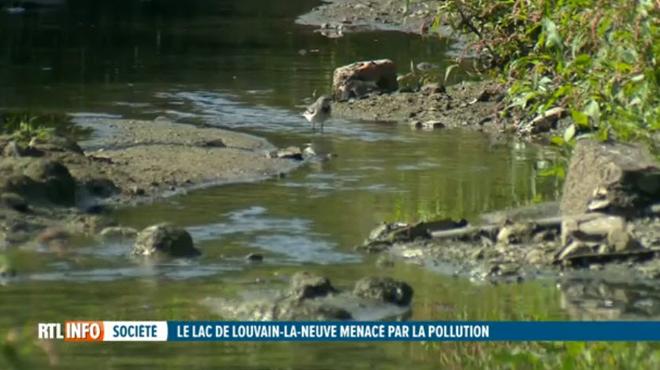 Le lac de Louvain-la-Neuve est en danger: la pollution MENACE ce monument de la ville