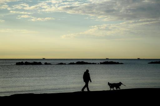 Norvège: des chiens frappés d'une mystérieuse maladie parfois mortelle
