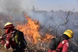Incendies en Amazonie - La Belgique contribue à la lutte contre les feux de forêt en Amazonie