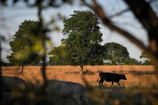 Comment faire de l'élevage en période de canicule?