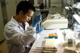 Explosion de dengue en Asie du Sud-Est- expérimentation d'une bactérie pour l'éradiquer