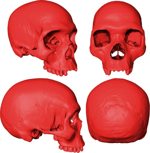 Des chercheurs ont créé un ancêtre virtuel de l'Homo sapiens