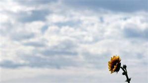 Météo : un ciel couvert avec quelques faibles pluies