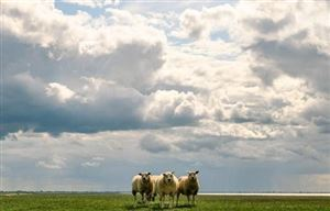 Météo - Ciel partagé entre éclaircies et champs nuageux
