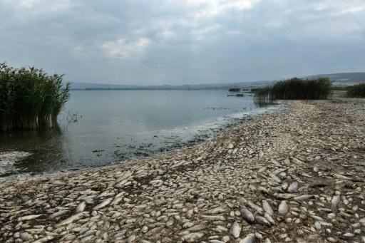 Grèce: des milliers de poissons asphyxiés dans un lac pour cause de sécheresse