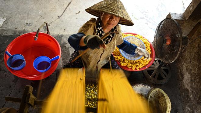 Au Vietnam, la production de soie est menacée par les jeunes qui la délaissent (photos)