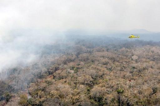 Bolivie: au moins 2,3 millions d'animaux ont péri dans les incendies