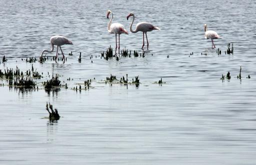 Camargue: un ouvrage hydraulique pour restaurer l'habitat naturel de centaines d'espèces
