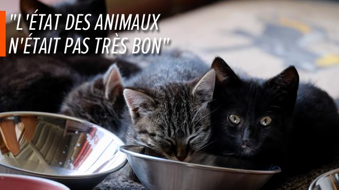 Une cinquantaine de chats saisis chez une habitante de Dixmude: