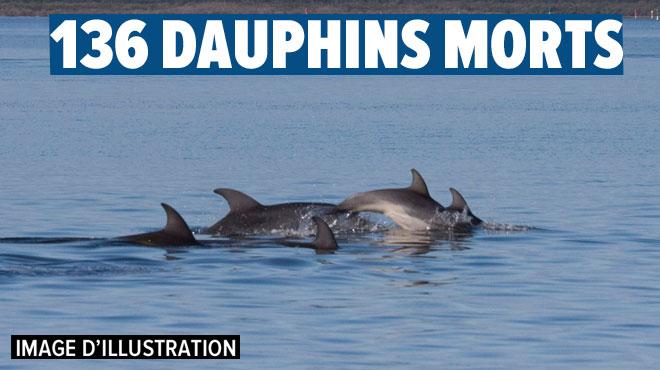 Une centaine de dauphins échoués mystérieusement sur une plage du Cap-Vert (vidéo)