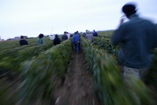 Pesticides: les viticulteurs bourguignons