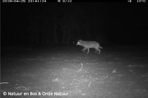 L'association Hubertus Vlaanderen demande aux chasseurs de respecter la loi