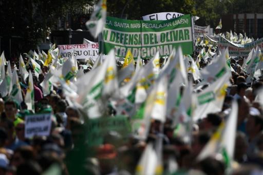 Des milliers de producteurs d'olives manifestent à Madrid contre la chute des prix