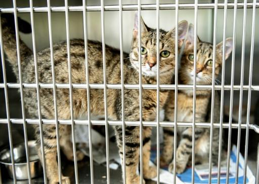SPA: 1.684 animaux adoptés, surtout des chats, aux Journées portes ouvertes