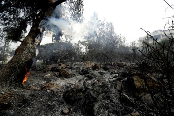 Le Liban pleure ses forêts réduites en cendres par les incendies