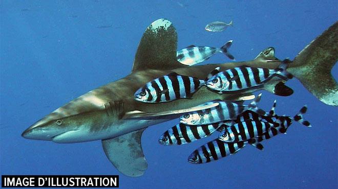 L'horreur au large d'une île polynésienne: une touriste attaquée par un requin alors qu'elle observait les baleines avec une guide