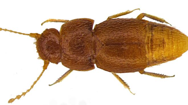Un chercheur découvre un nouvel insecte et le nomme... Greta: