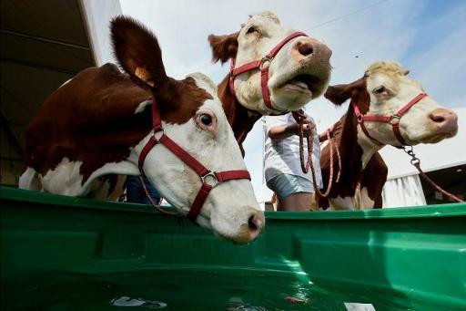 La Fwa demande à Delhaize de retirer une publicité pour du lait qui n'est pas à son goût