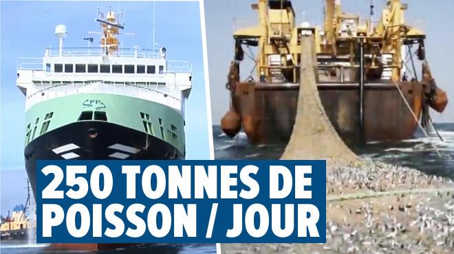 Le Margiris, un bateau de pêche géant, navigue en mer du Nord: pêcheurs et ONG l'accusent de décimer les fonds marins